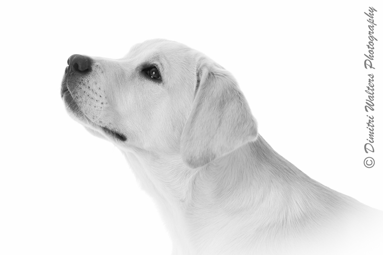 Pet photography in West Sussex
